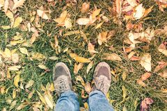 Two legs in jeans and sneakers on green grass and fallen autumn royalty free stock images