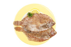 Two lemon sole on a plate. Two lemon sole flatfish on a plate Stock Image