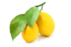 Two lemons on a branch isolated. Stock Image