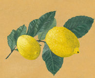 Two lemons on a branch - oil painting Royalty Free Stock Photography