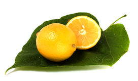 Two lemons on green leaf Stock Photography