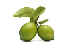 Two lemons witn leaves. Stock Image