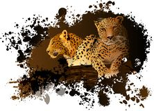 Two leopards on an abstract background. Stock Images