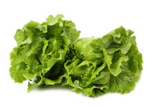 Two lettuce stock photo