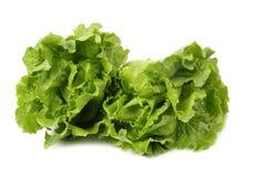 Two lettuce Stock Photo
