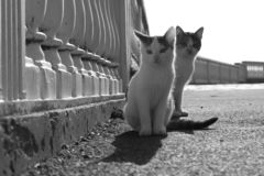 Two light kittens are sitting in the park stock photos