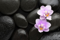 Two  light pink  orchids  lying on wet black stones. Viewed from above. Spa concept Royalty Free Stock Photography