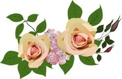 Two light roses decoration on white Royalty Free Stock Images