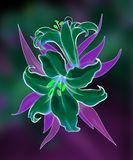 Two lilies illustration Stock Photos