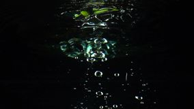 Two lime slices fall under water super slow motion shot. Black background. Clip stock footage