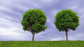 Two limes on a background cloudy sky Stock Image