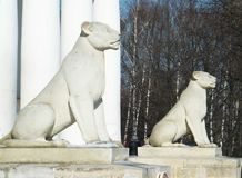 Two lionesses Royalty Free Stock Photo