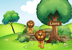 Two lions at the forest with a wooden signboard Stock Photo