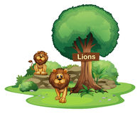 Two lions with a wooden signboard Stock Photo