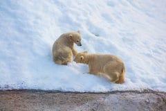 Two little bears Stock Image