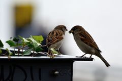 Two little bird Stock Photography