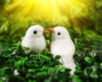 Two little birds in love looking at each other Stock Photography