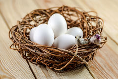 Two little birds on a nest with eggs Royalty Free Stock Image