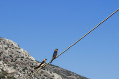 Two little birds sitting on a wire. Concept - love. Royalty Free Stock Images