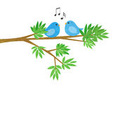 Two Little Birds on a Tree Branch Stock Image