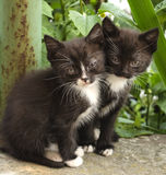 Two little black and white kittens. On a background of plants Royalty Free Stock Photos