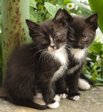 Two little black and white kittens. On a background of plants Royalty Free Stock Images