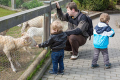 Two little boys and father feeding animals in zoo Royalty Free Stock Images