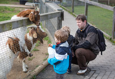 Two little boys and father feeding animals in zoo Stock Images