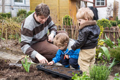 Two little boys and father planting in garden Stock Photography