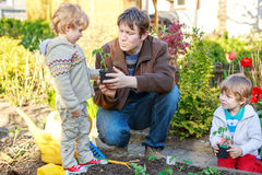 Two little boys and father planting seedlings in vegetable garde Royalty Free Stock Photo