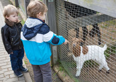 Two little boys feeding animals in zoo Stock Image