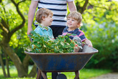 Two little boys having fun in wheelbarrow pushing by father Royalty Free Stock Images