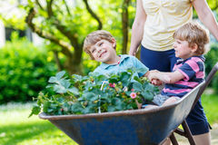 Two little boys having fun in a wheelbarrow pushing by mother Stock Images