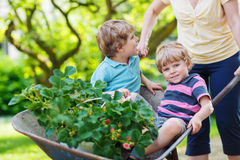 Two little boys having fun in a wheelbarrow pushing by mother Stock Image