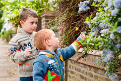 Two little boys picking flowers. Two boys on the street picking flowers from hedges on the street. They are both happy and healthy with the focus of the image stock image