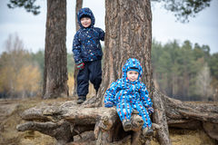 Two little boys playing, on autumn landscape, sitting and smiling the tree root Royalty Free Stock Photo