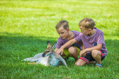Two little boys sitting on the grass and touching australian kan Stock Photography
