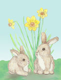 Two little Bunnies Royalty Free Stock Photography