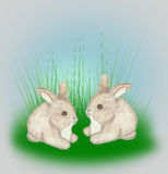 Two little Bunnies Stock Photo