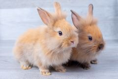 Two little bunny rabbits stay on gray wooden pattern background with different positions stock image