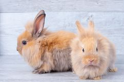 Two little bunny rabbits stay on gray wooden pattern background with different positions royalty free stock photos