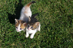 Two little cats on the grass of the garden. Stock Photography