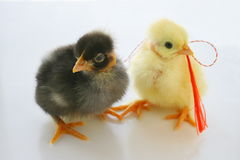 Two Little Chickens for present Stock Photo