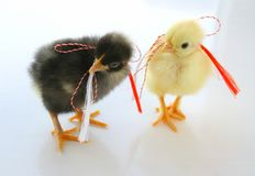 Two Little Chickens for Spring Holidays Royalty Free Stock Image