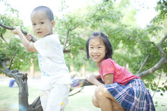 Two little children sitting on the tree. Two asian little children sitting on the tree Stock Image