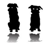 Two little dogs silhouettes Stock Photos