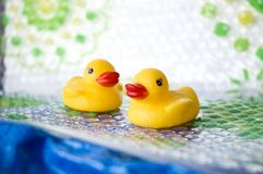 Two little ducks Royalty Free Stock Photo