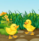 Two little ducks in the garden Royalty Free Stock Photo