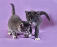 Two little fluffy kitten on purple Royalty Free Stock Image