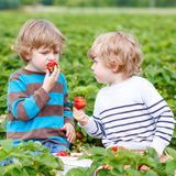Two little friends having fun on strawberry farm in summer Royalty Free Stock Photo